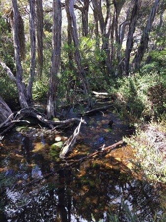 Cradle Mountain-Lake St. Clair National Park, Αυστραλία: photo4.jpg