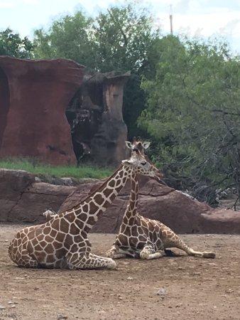 Gladys Porter Zoo: photo4.jpg