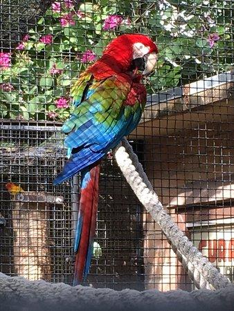 Gladys Porter Zoo: photo7.jpg