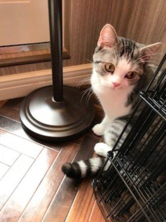 Cat Cafe Melbourne Review