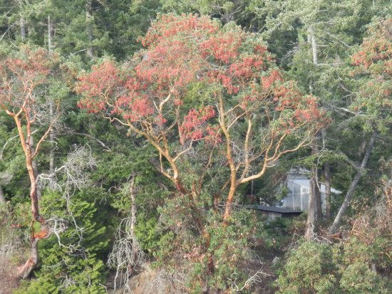 Pender Island, Canada: Pub Scenery Can't Beat Arbutus Trees