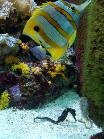 20171120 133121 Picture Of Shedd Aquarium