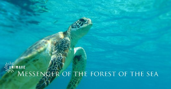 Amami, Japan: 海の森の使者との出逢い