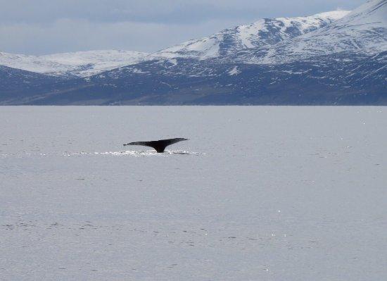 Husavik, IJsland: photo4.jpg