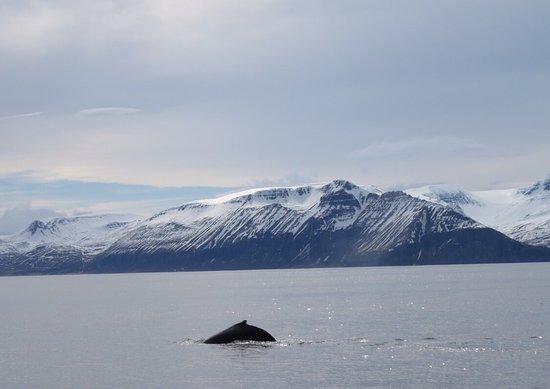 Husavik, IJsland: photo5.jpg