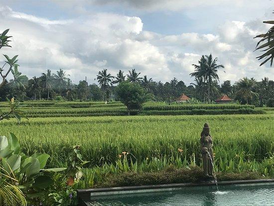 Banjar, Indonésie : Maravilloso hotel, el servicio la infraestructura inmejorable. El mejor hotel para conocer Bali❤