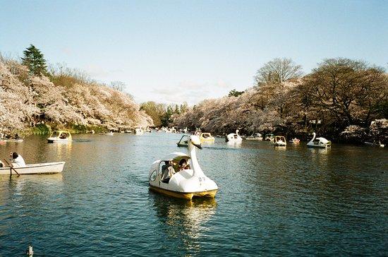 Inokashira Onshi Park: photo1.jpg