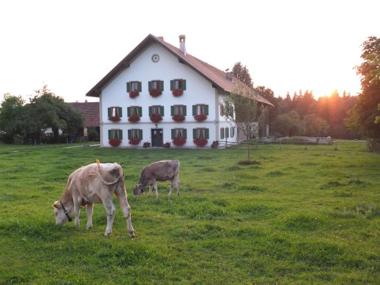Wies Church: Part of the pastoral setting
