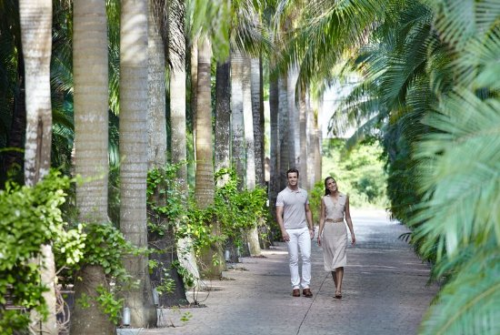 Presidente Inter-Continental Cozumel Resort & Spa: Tree-lined Entrance
