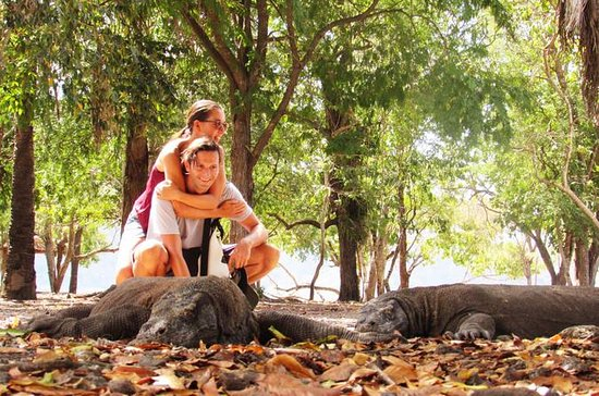 3-day Komodo National Park tour from...