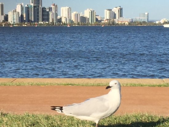 South Perth, Australia: Walk; Ride the bike; play on the lawns or take a ferry enjoy the views