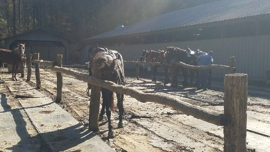Smoky Mountain Riding Stables: 20171120_122159_large.jpg