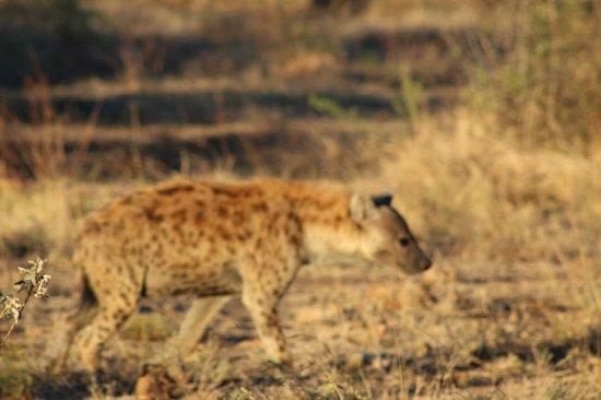 Madikwe Game Reserve, Zuid-Afrika: IMG_2799_large.jpg