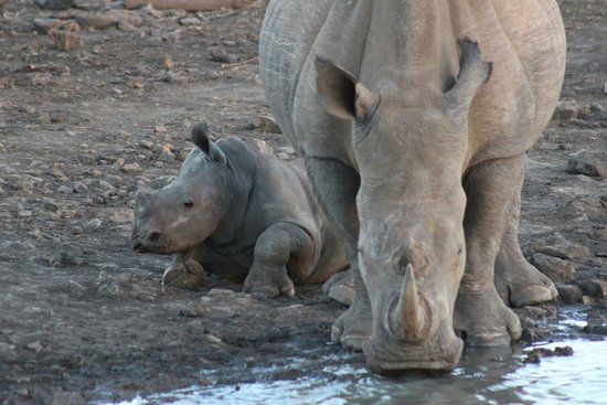 Madikwe Game Reserve, Zuid-Afrika: IMG_2794_large.jpg