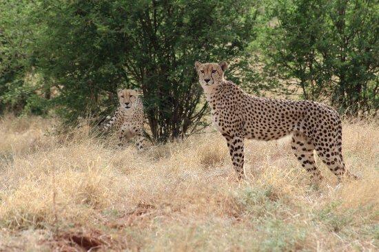 Madikwe Game Reserve, Sudáfrica: IMG_2705_large.jpg