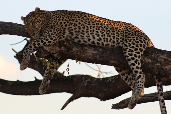 Madikwe Game Reserve, Sudáfrica: IMG_2612_large.jpg