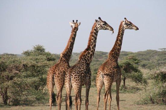 Sasha Safaris