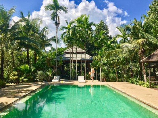 Pool - Picture of Mae Nai Gardens, Mae Rim - Tripadvisor