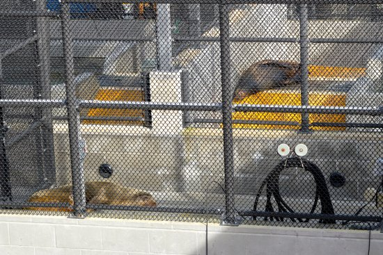 Marine Mammal Center : Some of the animals are sicker than others and just need to rest