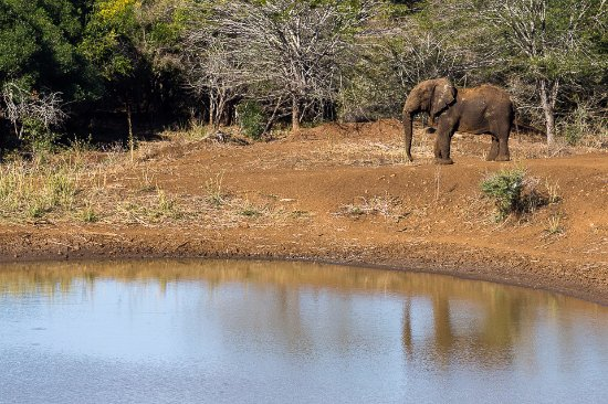 Pongola, South Africa: A lone elephant bull at the Lodge Dam