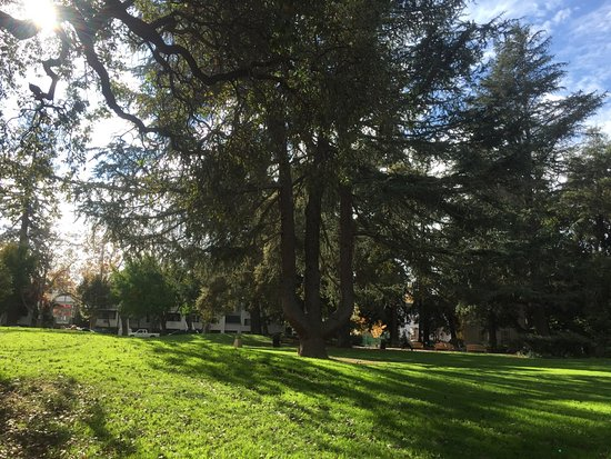 Pioneer Memorial Park: Отличная поляна для отдыха.