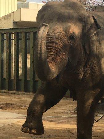 Kobe City Oji Zoo : photo5.jpg