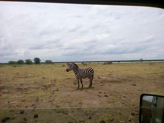 Fikiria Tanzania Safaris