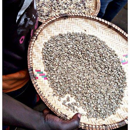Serengeti-Park Hodenhagen: Coffee tour,pure organic,Arabica