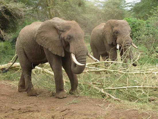 only elephant should wear ivory picture of emandy adventures