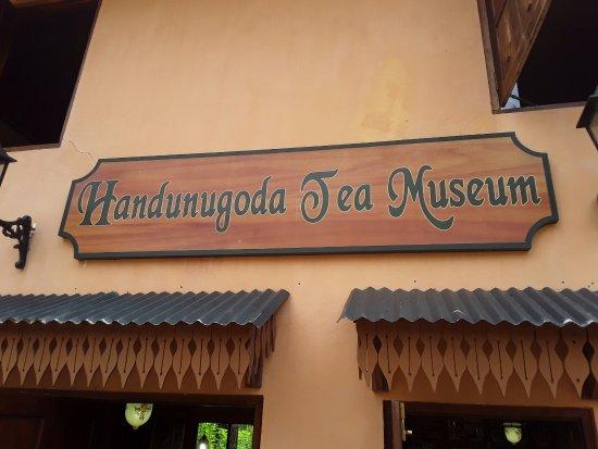 Tangalle, Sri Lanka: Handungoda tea plantation SRILANK