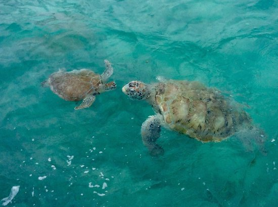 Plymouth, Τομπάγκο: Discover Tobago with us individualized professional tours in small groups .  English, French, Sp