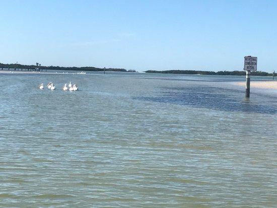 Treasure Island, FL: @ shell key
