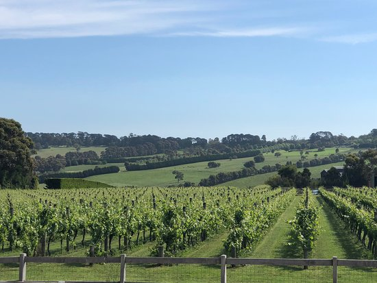 The tour included visits to some of Mornington's best vineyards.