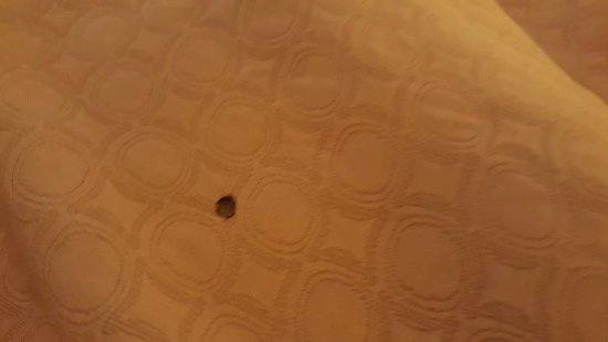 Super 8 by Wyndham Franklin/Middletown Area: More burn holes in bedding.