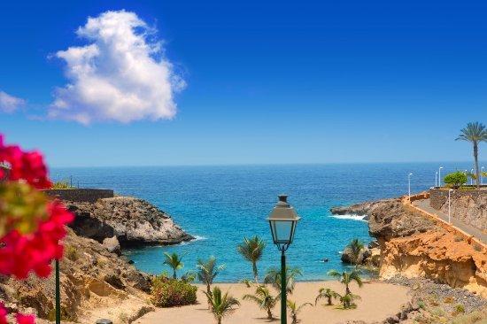 Canary Island Transfer