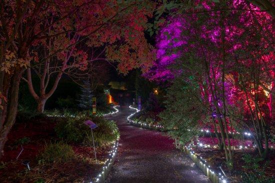 Great Torrington, UK: GLOW Illuminations5