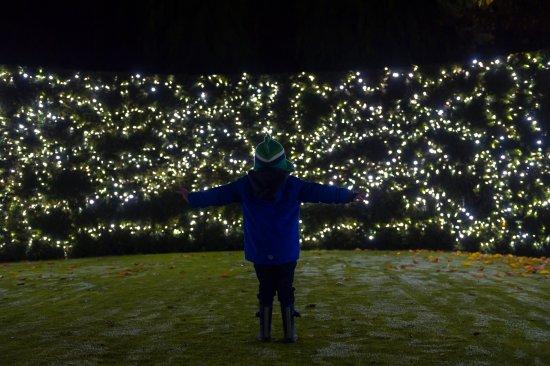 Great Torrington, UK: GLOW Illuminations6
