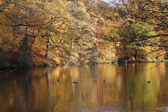 Lymm, UK: Autumn colours