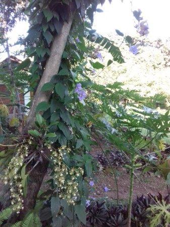 San Ramon, Nicaragua: photo2.jpg