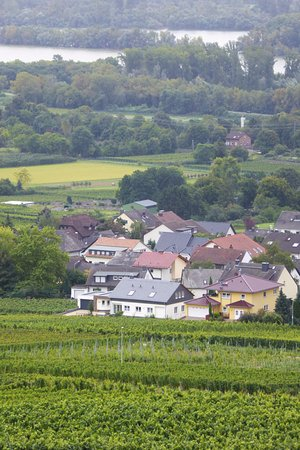 Benedictine Abbey of St. Hildegard: Vårt boende nedanför vinodlingarna