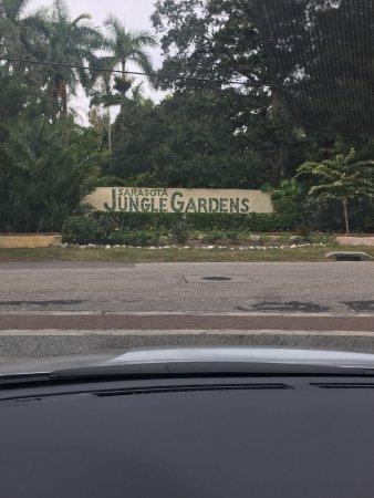 Sarasota Jungle Gardens: photo0.jpg