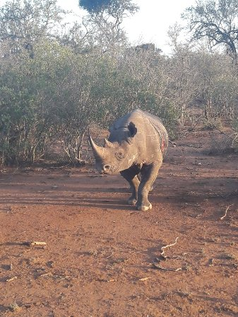 Mkhaya Game Reserve, Σουαζιλάνδη: 20171105_164903_large.jpg