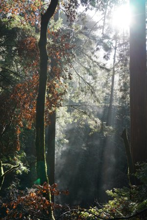Mill Valley, Califórnia: photo1.jpg