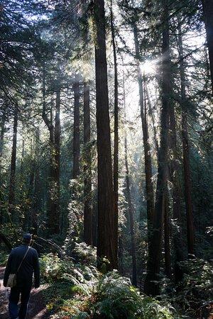 Mill Valley, Califórnia: photo2.jpg