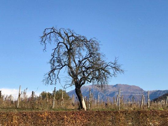 Provaglio d'Iseo, Italia: photo9.jpg