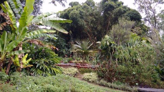 Santa Barbara, Costa Rica: Camino en los jardines. Botanical garden walk.