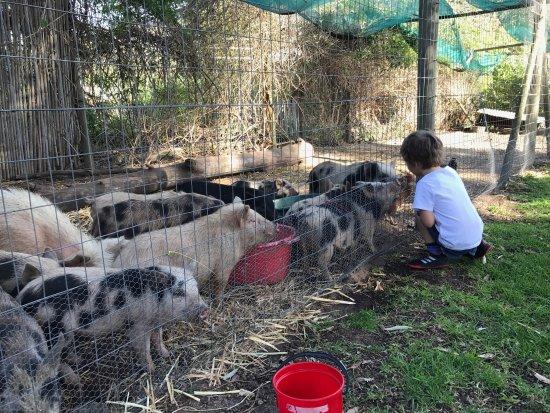 African Family Farm: photo0.jpg