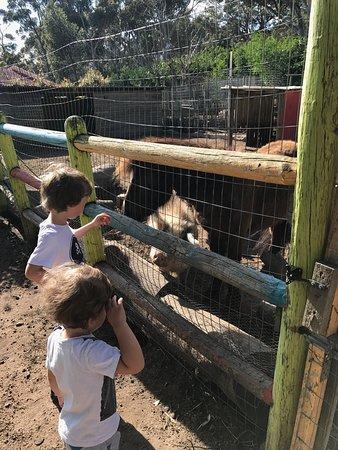 African Family Farm: photo1.jpg