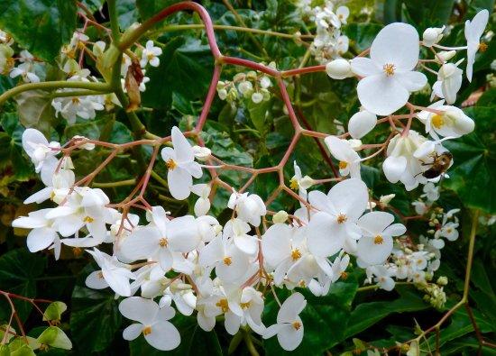 Pretty White Flowers Bild Von Monte Palace Madeira Funchal