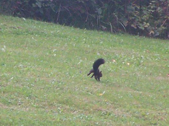 Vernantois, Francia: sur le parcours du golf un écureuil faisait des galipettes!!